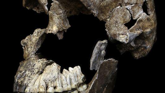 Galerie: Lebte dieser mysteriöse Affenmensch an unserer Seite?