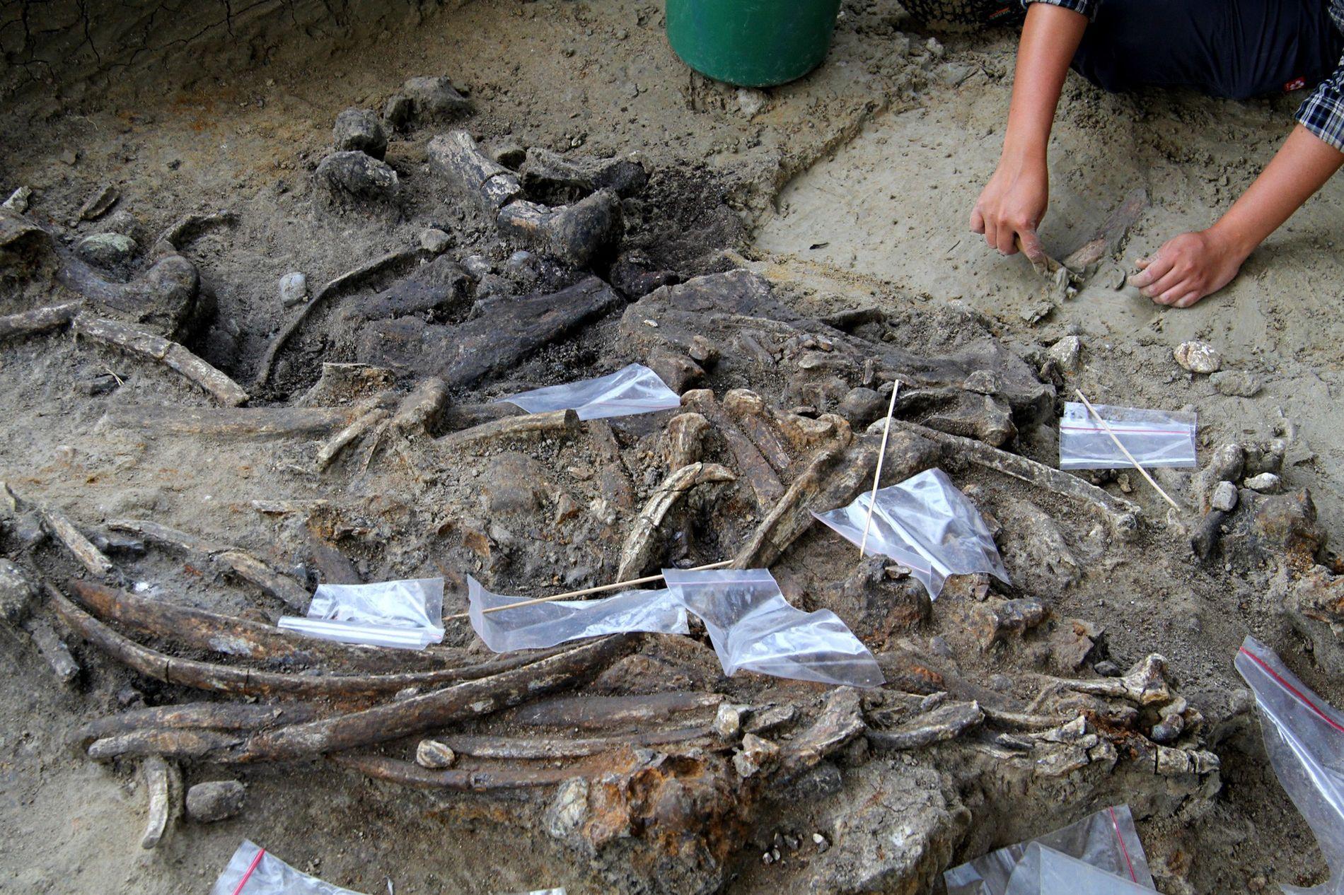 Forscher entdeckten auf der Philippinen-Insel Luzon eine etwa 700.000 Jahre alte Stätte, an der unbekannte Hominini ...