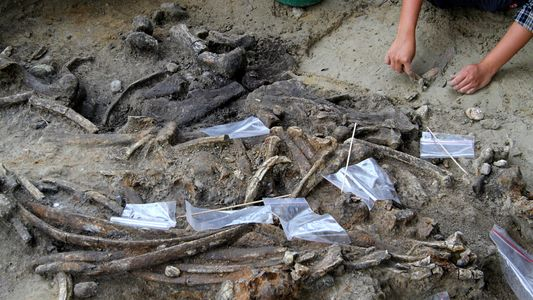Gehörten uralte Steinwerkzeuge mysteriösem Cousin des Menschen?