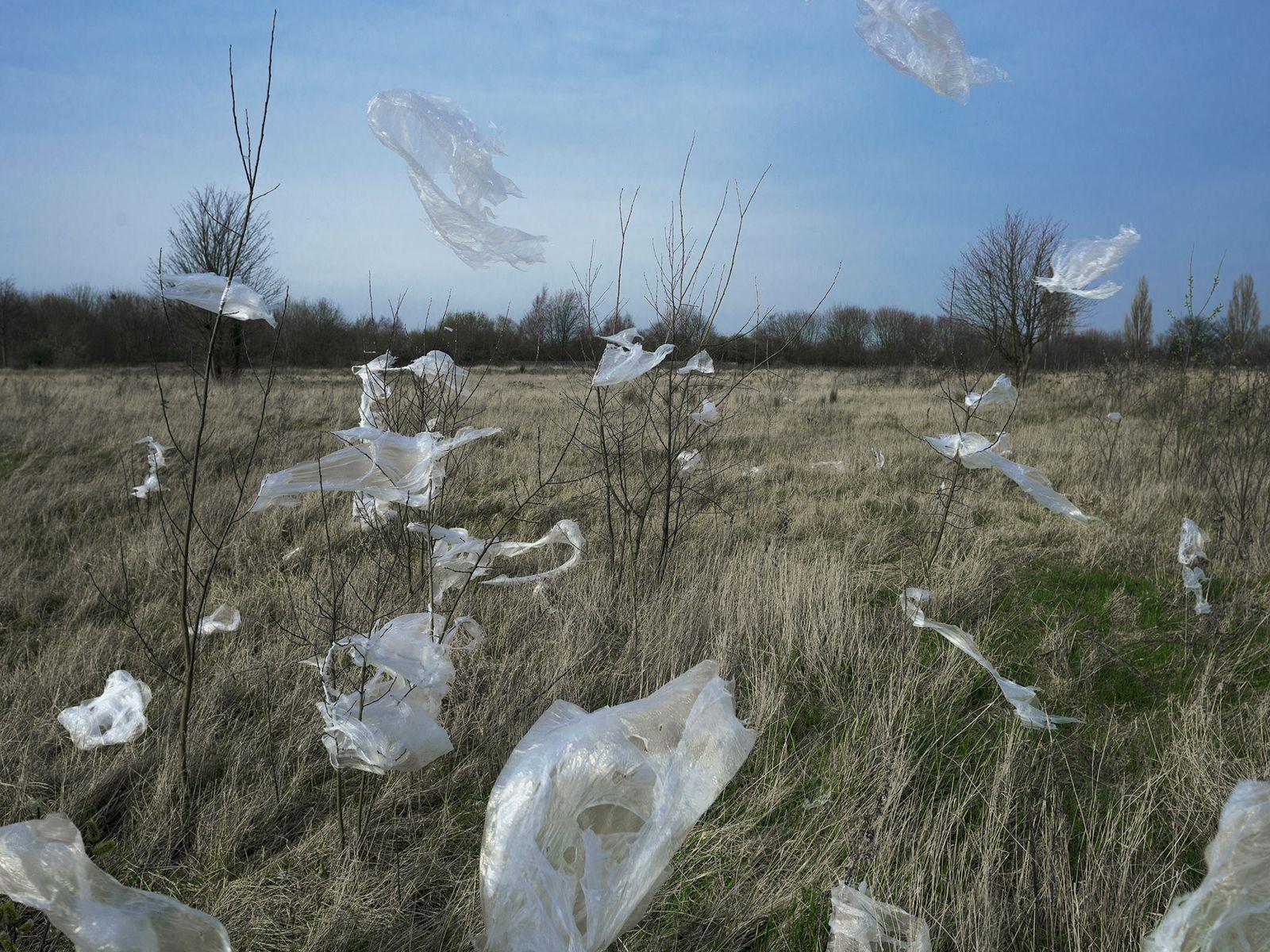 Plastikfolie weht durch die Landschaft und verfängt sich in der Vegetation. Mit der Zeit zerfällt das ...