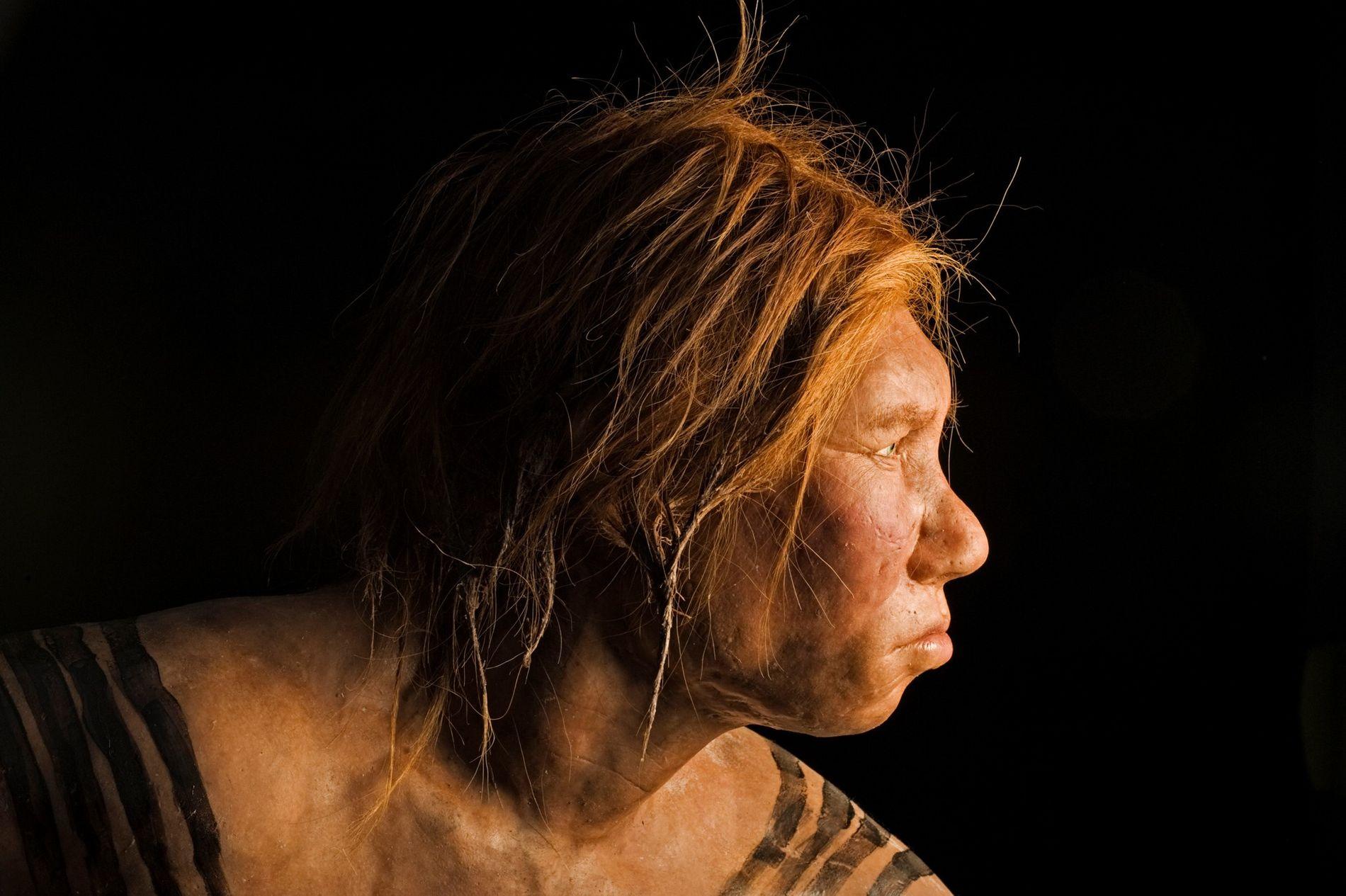 Lange Zeit waren Forscher davon ausgegangen, dass afrikanische Populationen keine Neandertaler-DNA in sich tragen. Neue Modelle ...