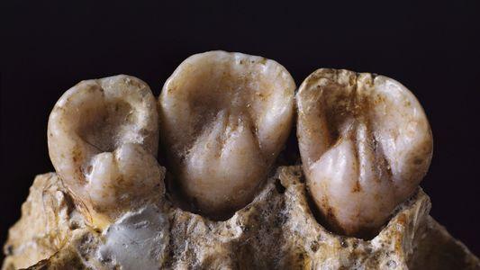 Zähne geben Einblick in das Leben von Neandertalern