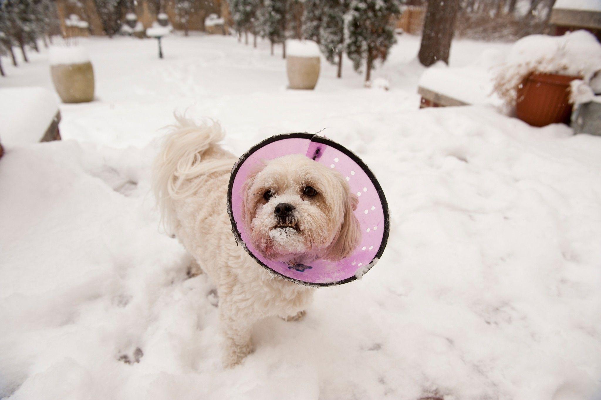 Hunde – die vergessenen Opfer der Opioidkrise