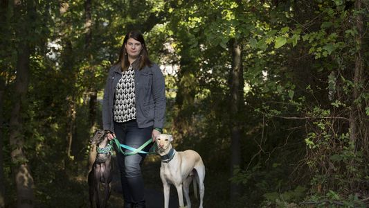 Gezüchtet, um zu sterben: Spaniens todgeweihte Jagdhunde