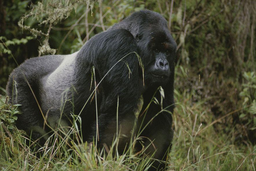 Warum bekommen auch Tiere graues Haar?