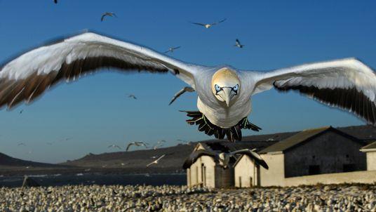 Die liebsten Wildtier-Fotos der National Geographic-Fotografen
