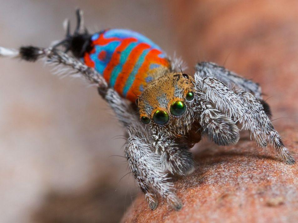 Spinnchen mit Spitznamen: Das sind Sparklemuffin und Skeletorus