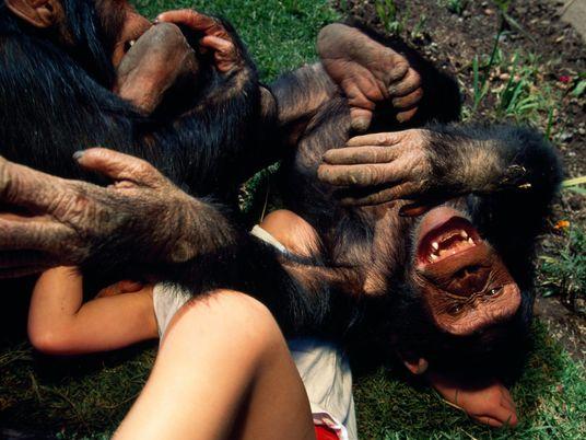 Können Tiere lachen? Kitzelexperimente geben Aufschluss.