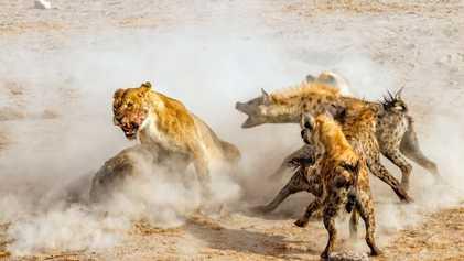 Galerie: 39 Aufnahmen von Tieren in Aktion