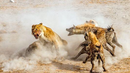 39 Aufnahmen von Tieren in Aktion