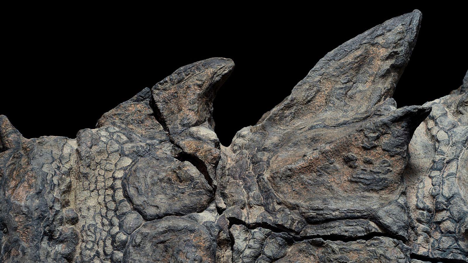 Platten des gepanzerten Dinosauriers