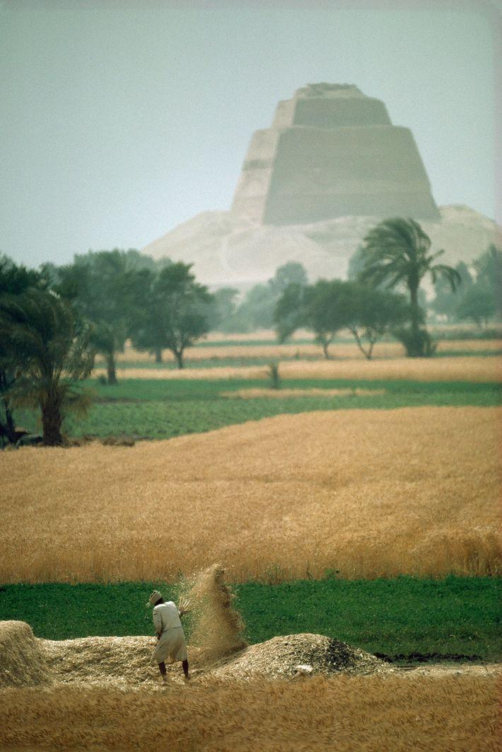 Nahe der Meidum-Pyramide trennt ein ägyptischer Bauer in seinem Feld die Spreu vom Weizen.