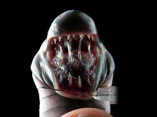 Sind das die ersten bekannten Amphibien mit giftigem Speichel?