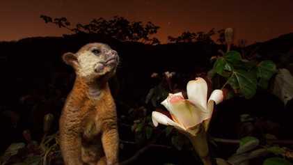 Galerie: Die geheimnisvolle Welt der Tiere bei Nacht