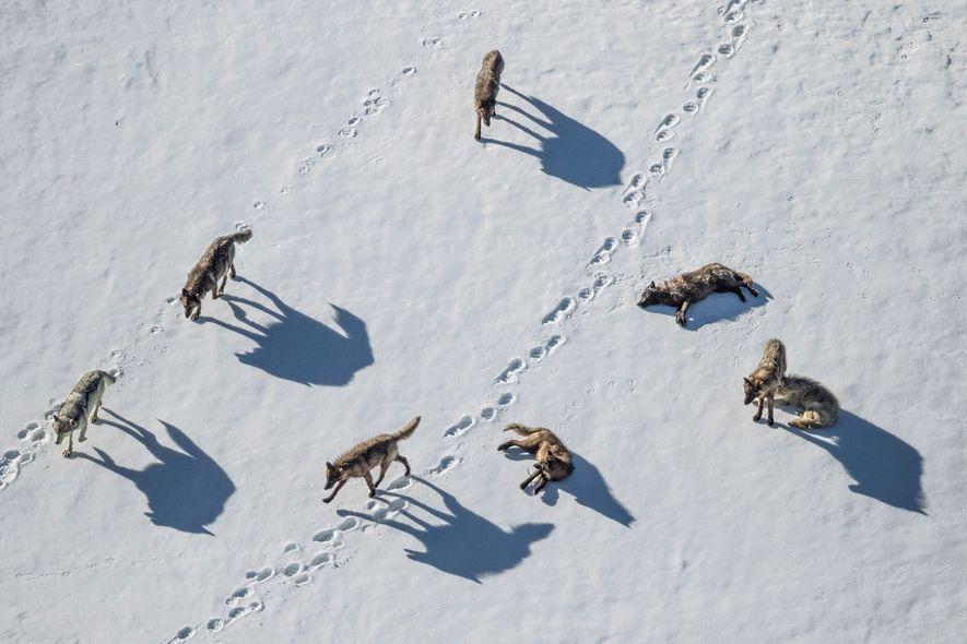 """Überlebenswichtig: Viele wilde Tiere können """"zählen"""""""