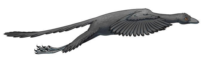 Darstellung eines Archaeopteryx im Flug.