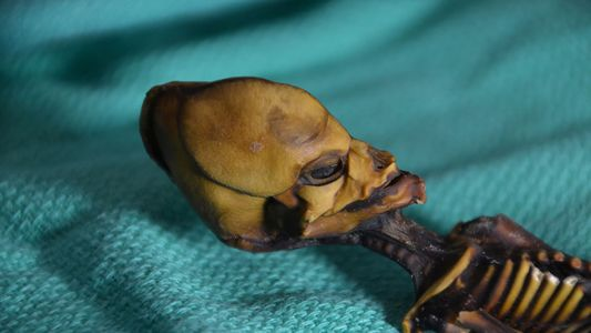 Atacama-Mumie: des Rätsels Lösung