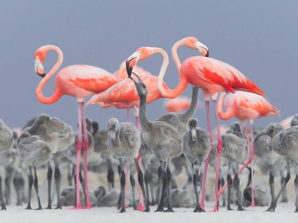 13 dramatische Aufnahmen zeigen die Schönheit und Wildheit von Vögeln