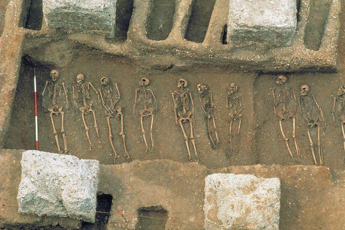 1986 entdeckten Archäologen ein Massengrab in East Smithfield in London, in dem Opfer des Schwarzen Todes ...