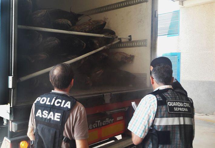 Polizisten begutachten den Thunfisch in einem Lastwagen.