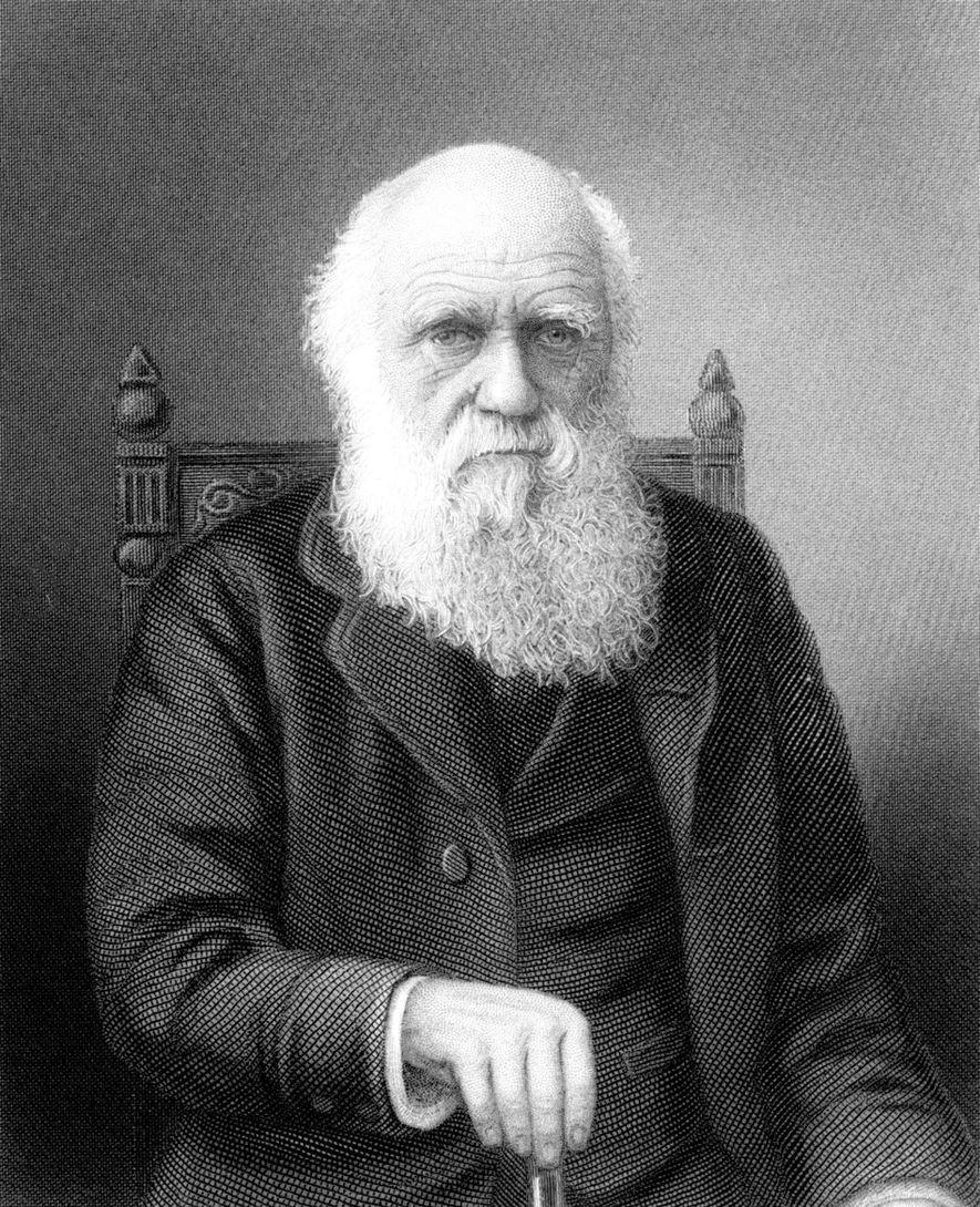 """Charles Darwin stellte eine Verbindung zwischen """"unpraktikabler Schönheit"""" und der Partnerwahl her."""