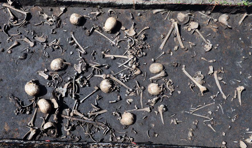 Die Überreste eines Opfers von der bronzezeitlichen Schlacht an der Tollense.