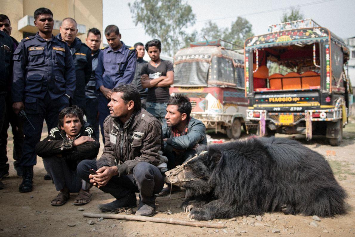 Sridevi, die andere befreite Bärin, liegt vor einer Polizeistation in Südnepal neben ihren drei Besitzern. Beide ...