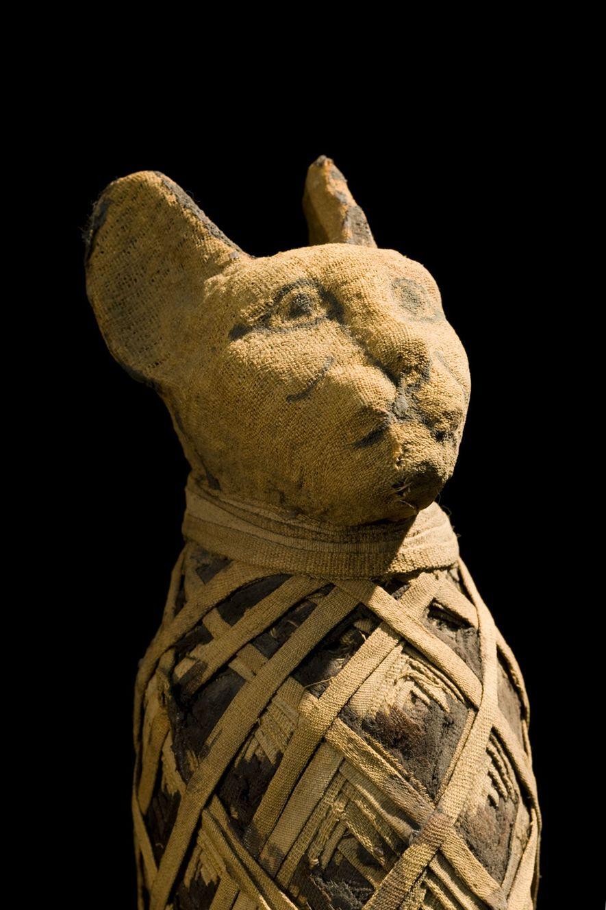 Eine ägyptische Katzenmumie
