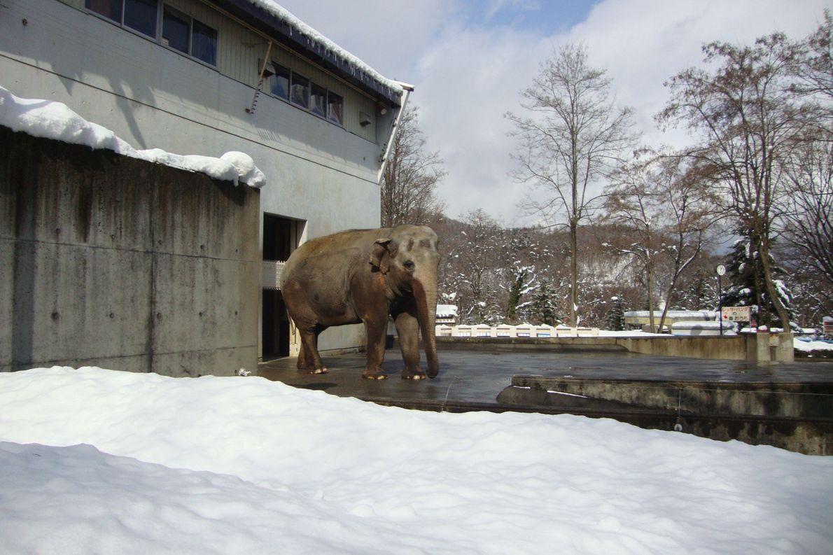 Fuko ist seit neun Jahren allein im Nagano Chausuyama Zoo.