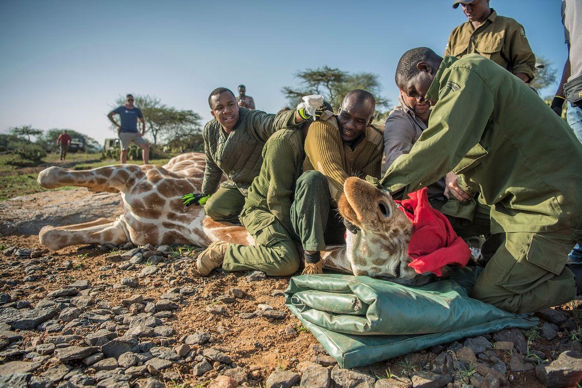 Forscher im Loisaba Wildlife Conservancy