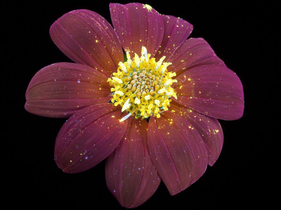 Galerie: Das unsichtbare Leuchten der Blumen