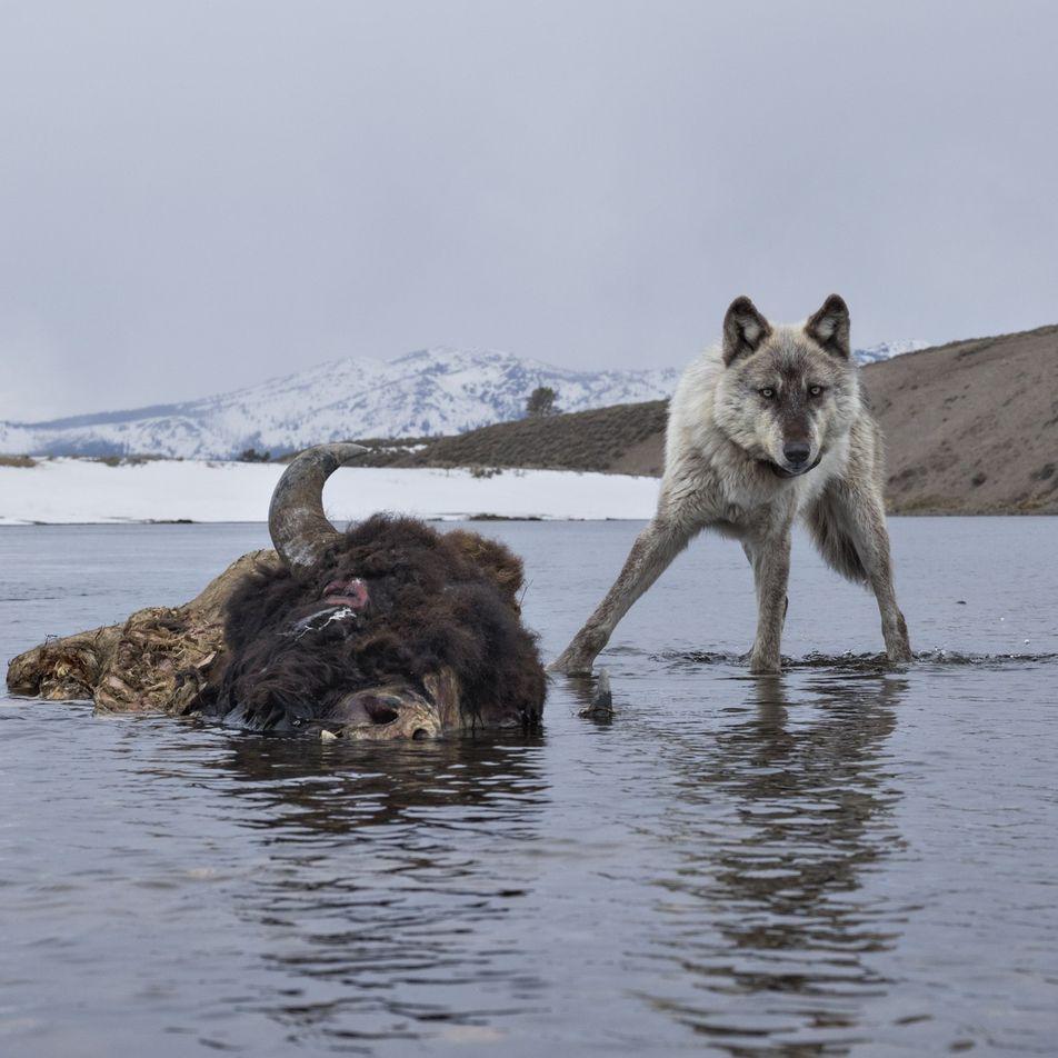 Galerie: Unsere liebsten Tierfotos aus Kamerafallen