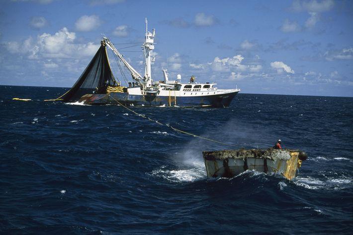 Dieses Schiff ist auf der Jagd nach Thunfisch, der vorwiegend bei der Hochseefischerei gefangen wird.