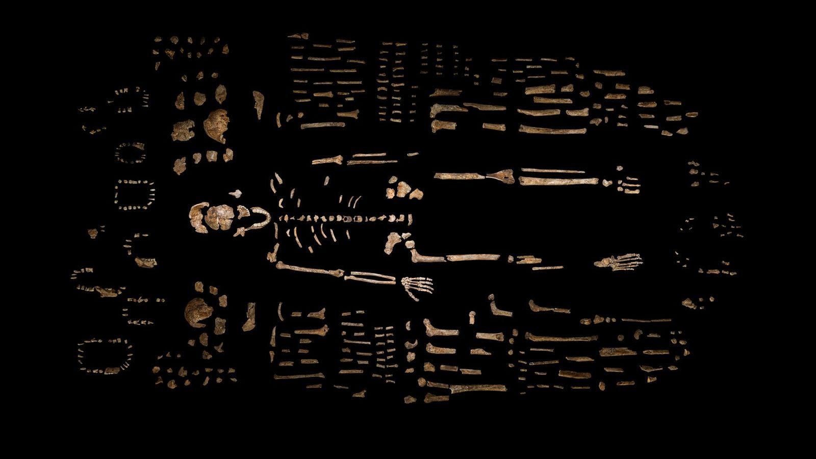Zusammengesetztes Skelett