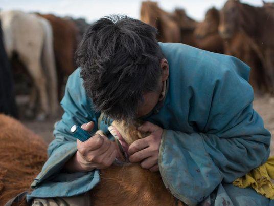 Zahnpflege für Pferde veränderte den Lauf unserer Geschichte