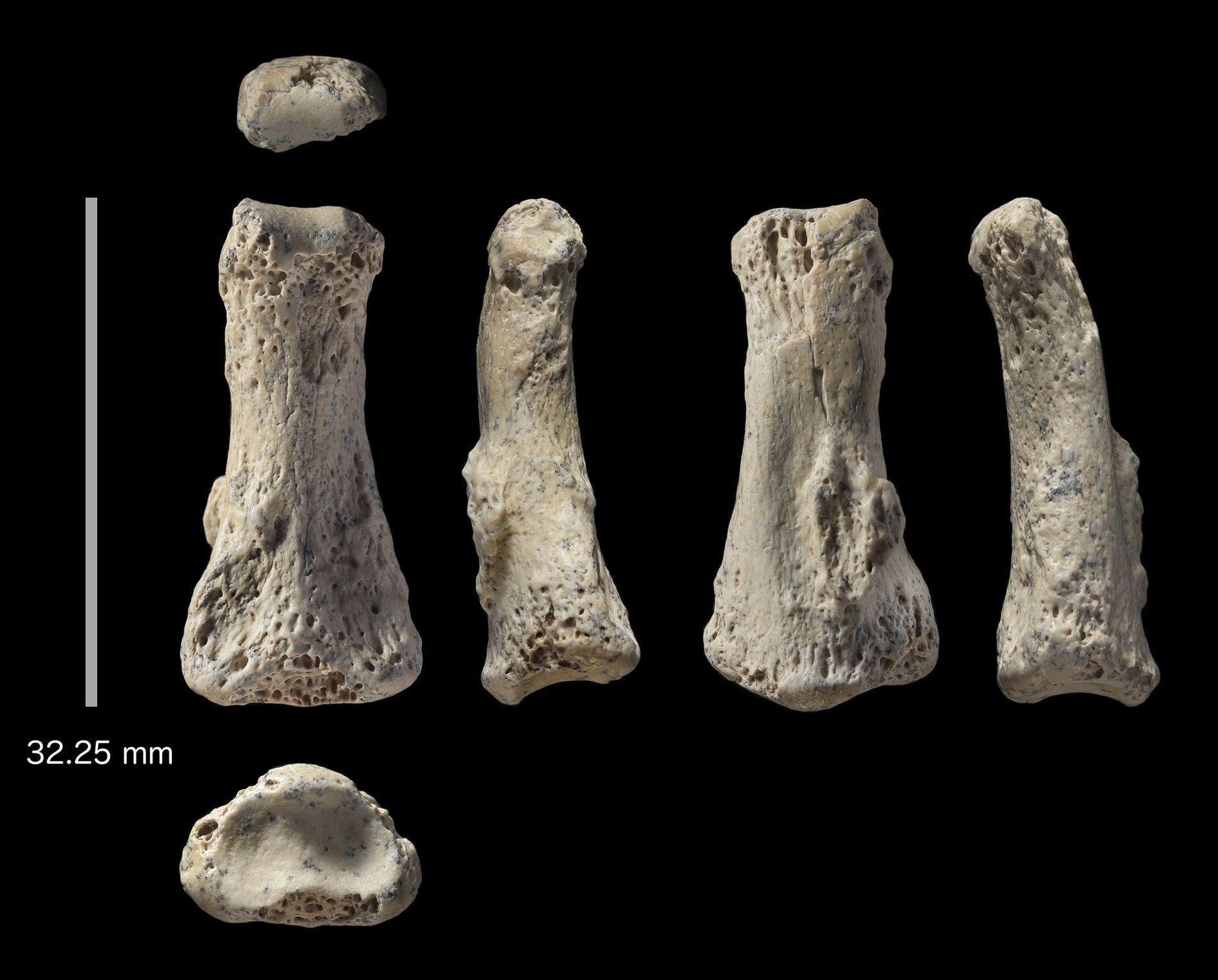 Der versteinerte Fingerknochen eines Homo sapiens wurde im Nordosten Saudi-Arabiens an einem ehemaligen See gefunden.