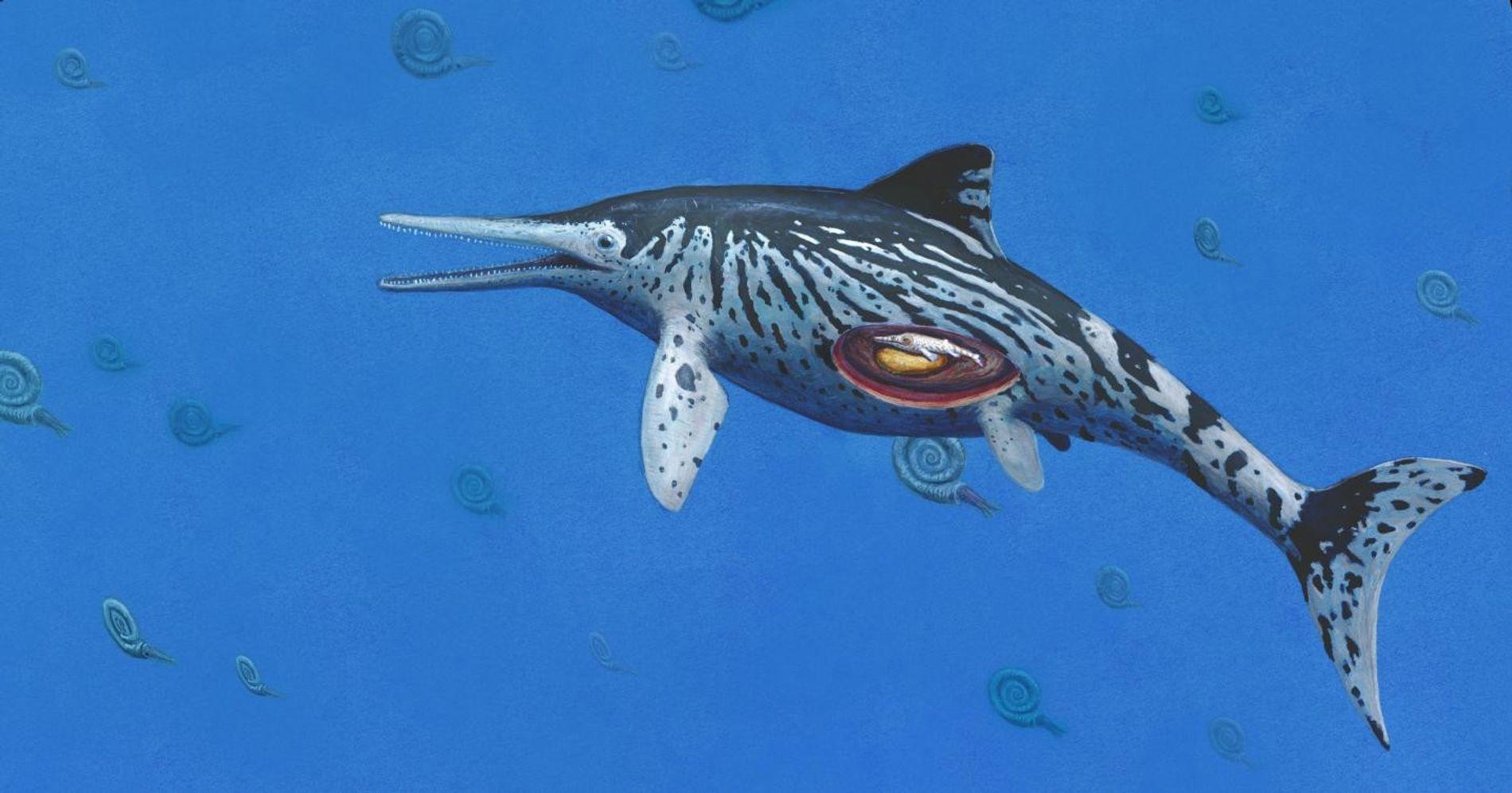 Künstlerische Darstellung eines trächtigen Ichthyosaurus.