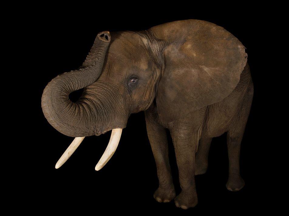 Galerie: Warum manche Tiere wichtiger sind als andere