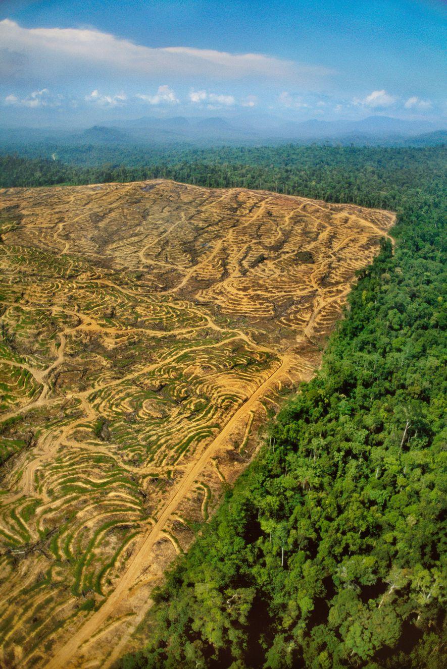 Rodungsschneisen durchziehen den Regenwald auf Borneo.