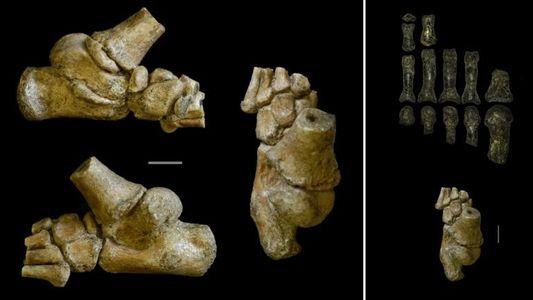 """""""Ältestes Kind der Welt"""" zeigt, wie unsere Vorfahren sich fortbewegten"""