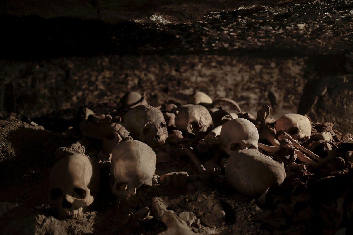 Schädel, die in dem Grab eines königlichen Goldschmieds aus dem Neuen Reich gefunden wurden, werden an ...