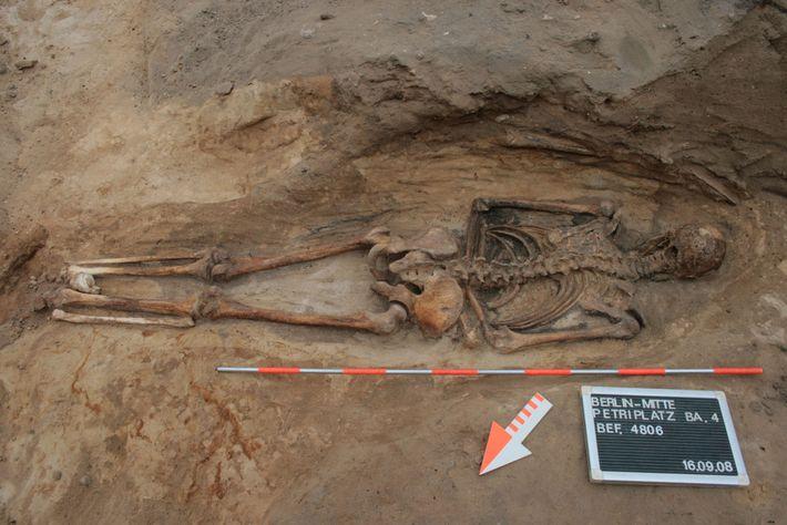 Bei einem mittelalterlichen Begräbnis auf einem Berliner Friedhof wurde ein Mann mit dem Gesicht nach unten ...