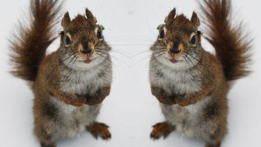 Infantizid und Kannibalismus: Die dunkle Seite der Hörnchen