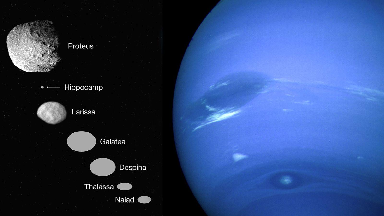 Im Jahr 1989 flog die Raumsonde Voyager 2 am Neptun (rechts) vorbei und entdeckte sechs kleine ...
