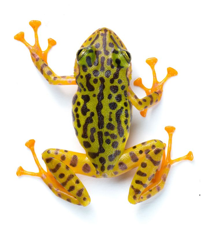 02-new-frog-species-ecuador