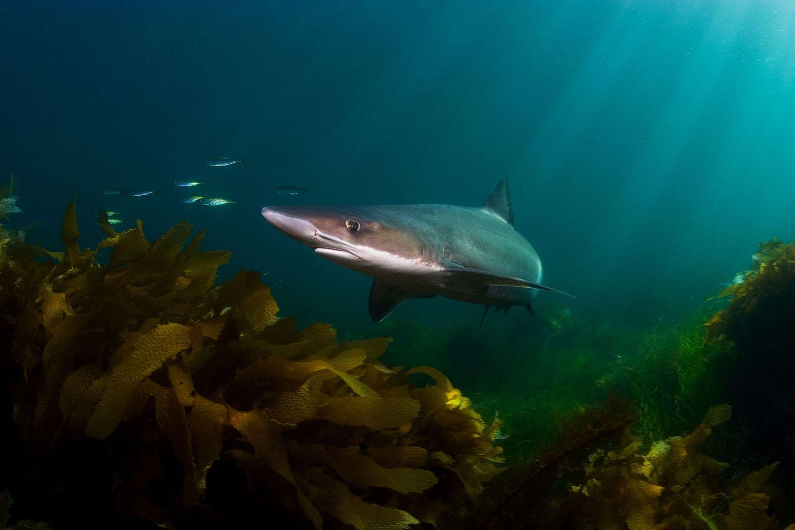 Sonnenmilch & Co: Viele Kosmetika enthalten Öl aus Hailebern