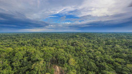 Foto eines Langhauses mit Strohdach im Amazonas-Dschungel in Draufsicht.