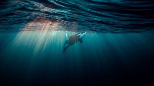Galerie: Das Leben unter dem Meer