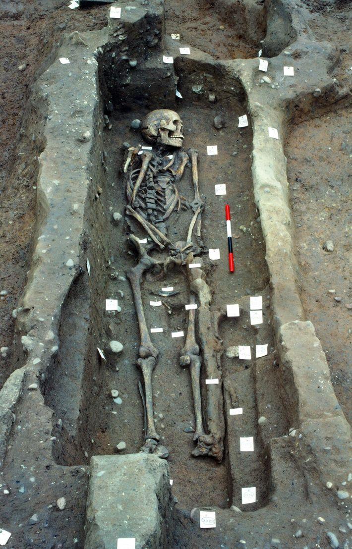 Grabungsstelle Wikingerknochen