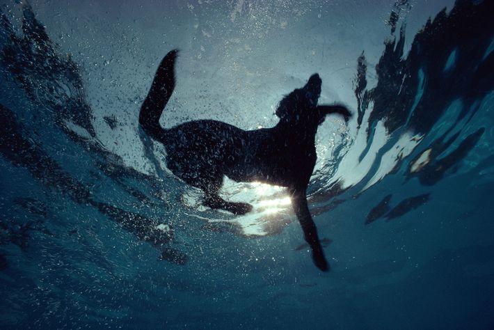 Ein aktiver Hund neigt eher zu einem gesunden Körpergewicht.